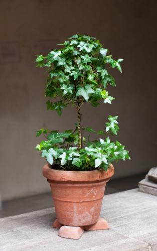 A pot on pot feed