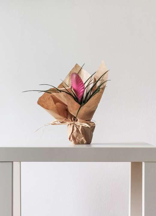 'Aechmea fasciata' Bromeliad
