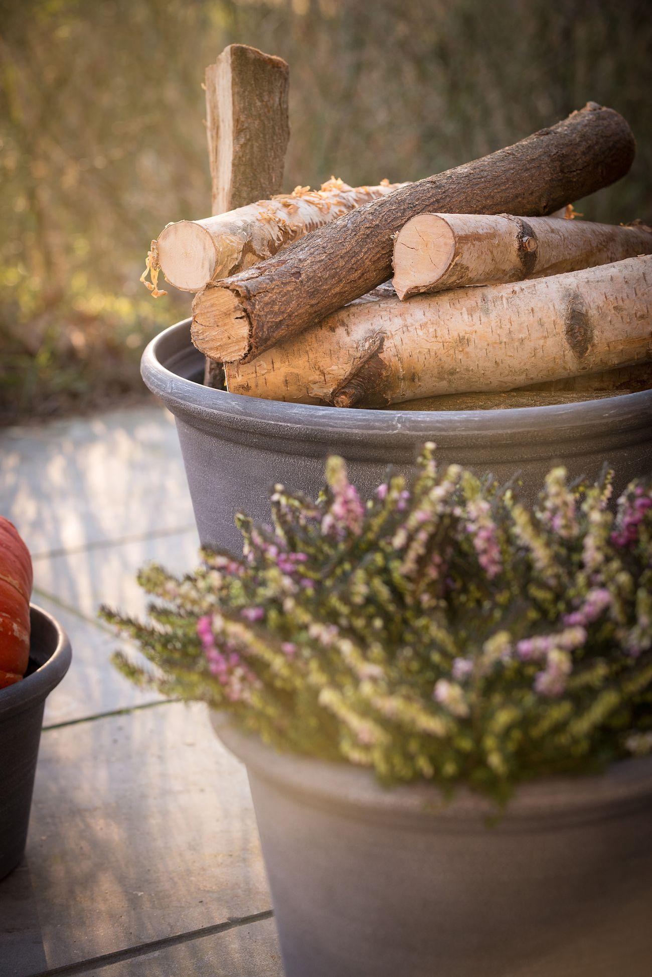 Verzorgingstips herfstbloeiers