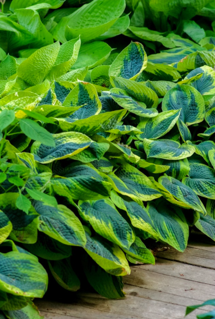 Top 6 plants for shady spaces