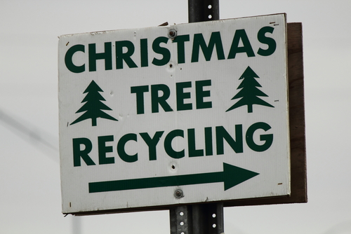 Christmas tree recycling and reusing tips