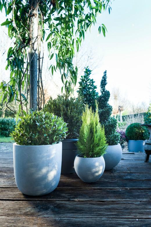 Tuinplant van de maand december: Kerstplanten!